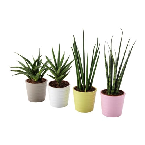 sansevieria plant met sierpot ikea. Black Bedroom Furniture Sets. Home Design Ideas