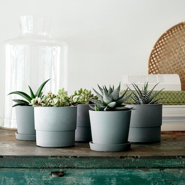 IKEA SUCCULENT Potplant