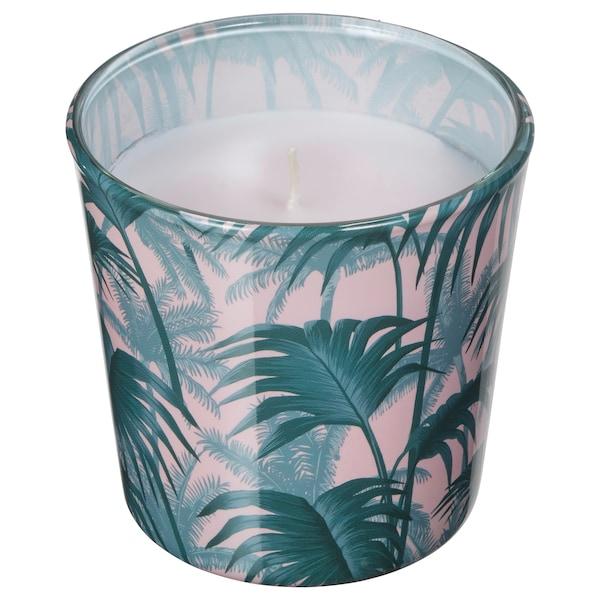 AVLÅNG lys i glass, uparfyert  palmeblad grønn 7.5 cm 8 cm 25 hr