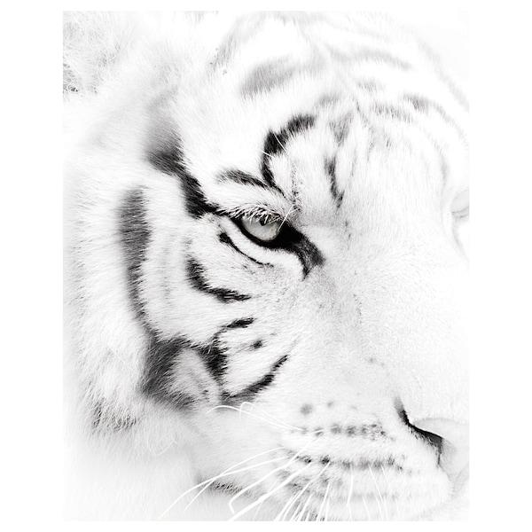 BILD Bilde, Fearless, 40x50 cm