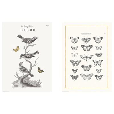 BILD Bilde, Flying creatures, 50x70 cm