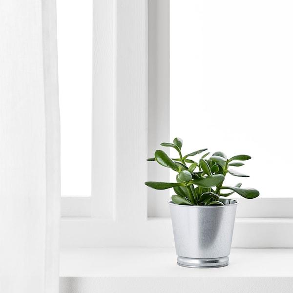 BINTJE Blomsterpotte, galvanisert, 9 cm