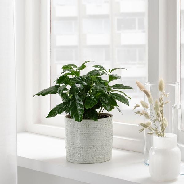 CHIAFRÖN Blomsterpotte, inne/ute hvit, 12 cm