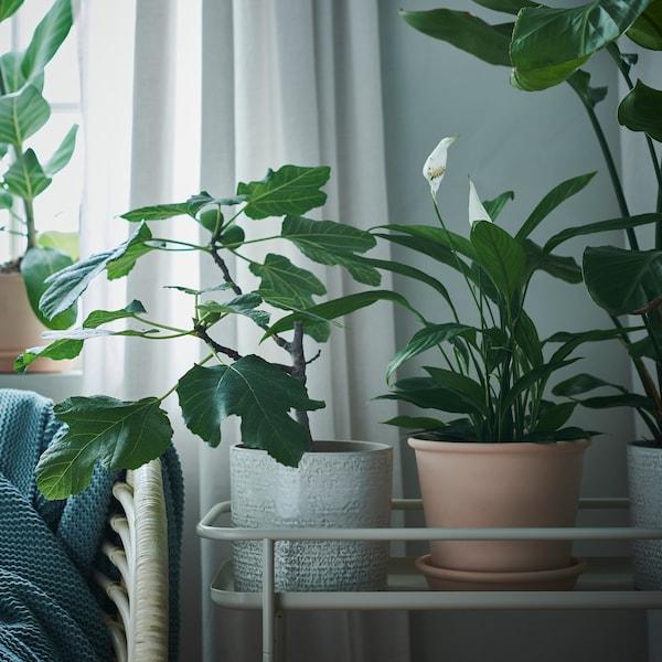 CHIAFRÖN Blomsterpotte, inne/ute hvit, 15 cm