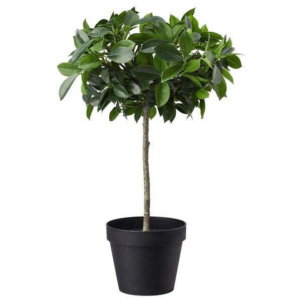 FEJKA Kunstig potteplante, inne/ute/bjerkefiken stamme, 12 cm