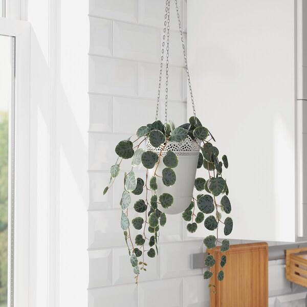 FEJKA Kunstig potteplante, inne/ute hengende/Marmorlanterne, 9 cm