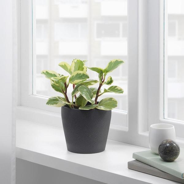 PERSILLADE Blomsterpotte, mørk grå, 12 cm
