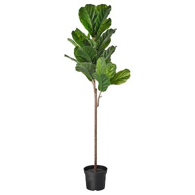 FEJKA Artificial potted plant, indoor/outdoor fiddle-leaf fig, 19 cm