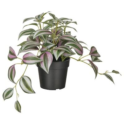 FEJKA Artificial potted plant, indoor/outdoor Spiderwort, 9 cm