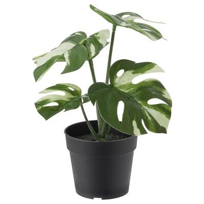 FEJKA Plante artificielle en pot, intérieur/extérieur monstera, 9 cm