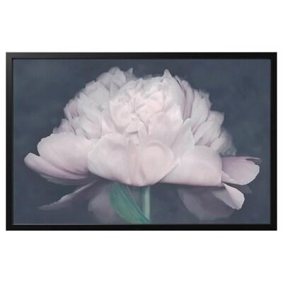 BJÖRKSTA Obraz z ramą, Kwitnienie/czarny, 118x78 cm