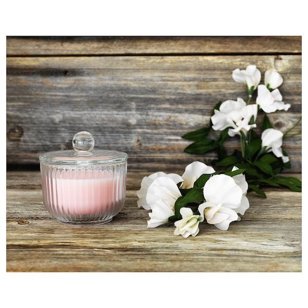 BLOMDOFT Świeca zapachowa w szkle, groszek pachnący/jasnopomarańczowy, 9 cm