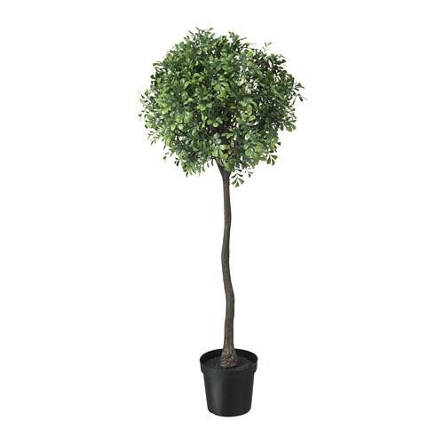 FEJKA Mākslīgie augs, 15 cm