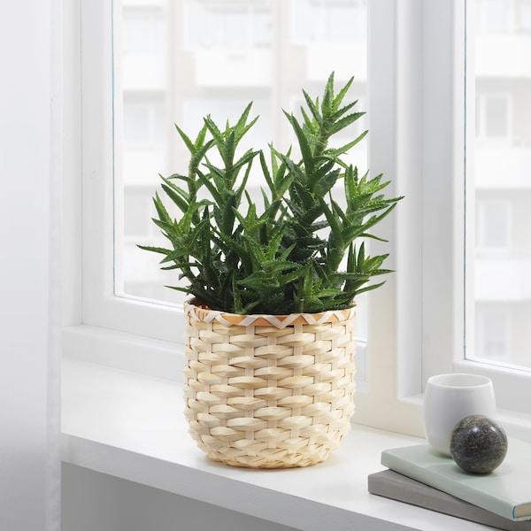 KAFFEBÖNA Osłonka doniczki, bambus, 15 cm