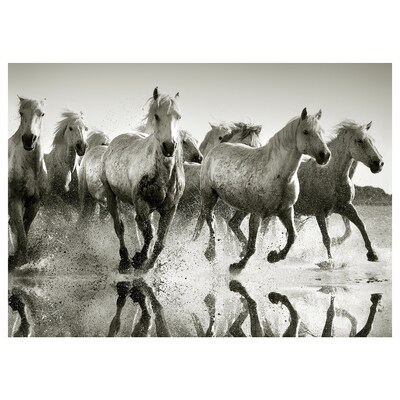 PJÄTTERYD Obraz, Dzikie konie, 70x50 cm