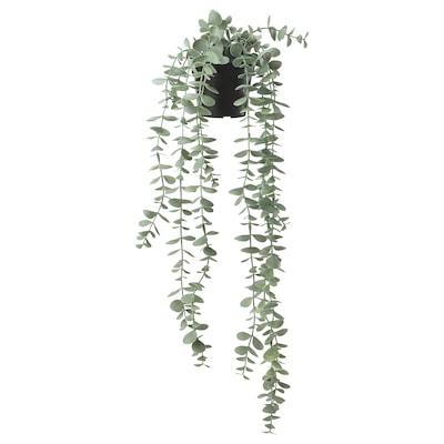 FEJKA Planta artificial em vaso, interior/exterior p/pendurar/eucalipto, 9 cm