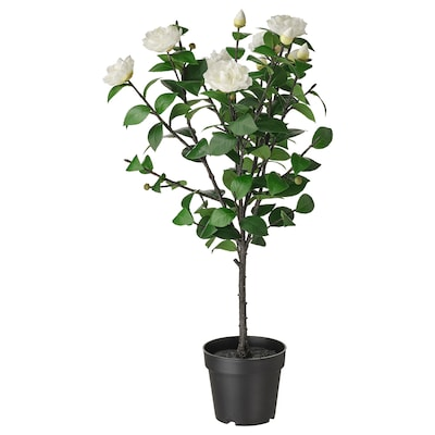 FEJKA Artificial potted plant, in/outdoor/Camellia white, 19 cm
