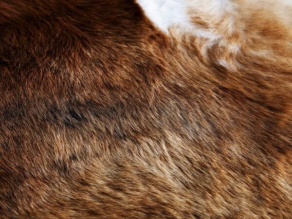 KOLDBY cow hide brown 3.00 m²