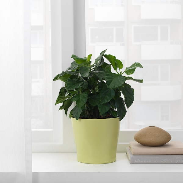 PAPAJA Plant pot, green, 12 cm