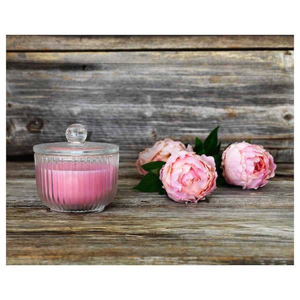 BLOMDOFT Lumânare parfumată pahar, Bujor ( Paeonia)/roz, 9 cm