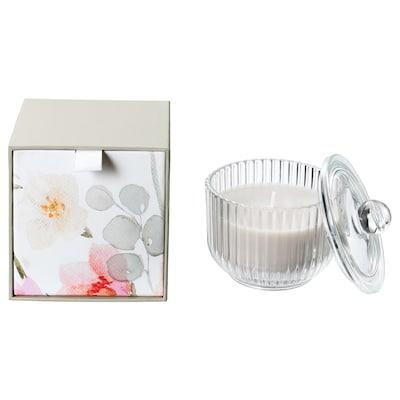 BLOMDOFT Lumânare parfumată pahar, Gladiolă(Gladiolus)/gri, 9 cm