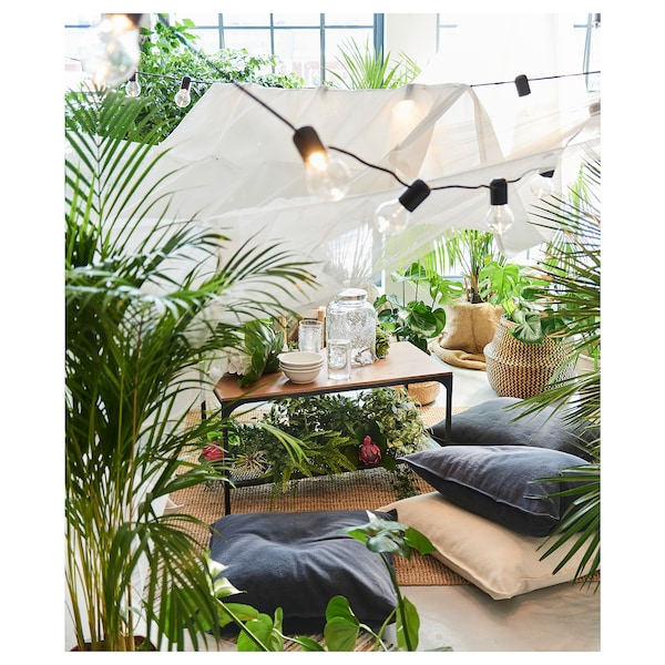 DYPSIS LUTESCENS Plantă naturală, Palmier Areca, 24 cm