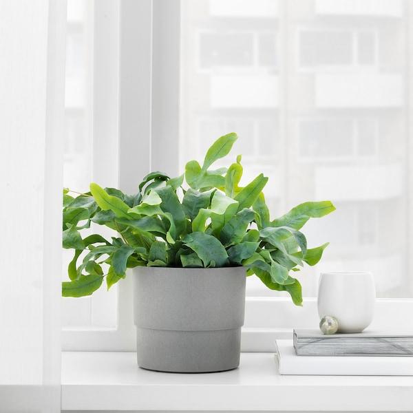 NYPON Ghiveci, interior/exterior gri, 12 cm