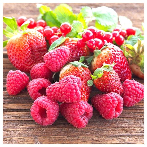 SINNLIG lumânare parfumată pastilă fructe pădure/roşu 38 mm 4 h 30 bucăţi