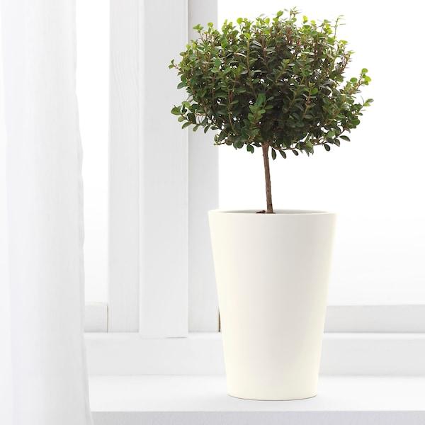 PAPAJA Saksija, bela, 12x19 cm