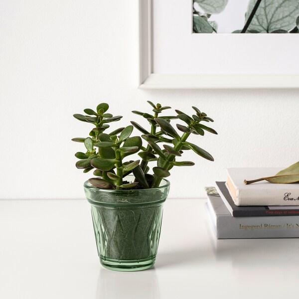 IKEA VÄLDOFT Mirisna sveća u čaši