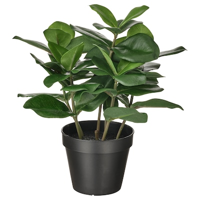 FEJKA Artificial potted plant, in/outdoor Clusia, 12 cm