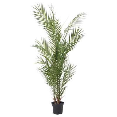FEJKA Artificial potted plant, in/outdoor/Kentia palm, 15 cm