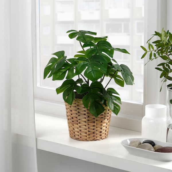 FEJKA Artificial potted plant, in/outdoor Monstera, 12 cm