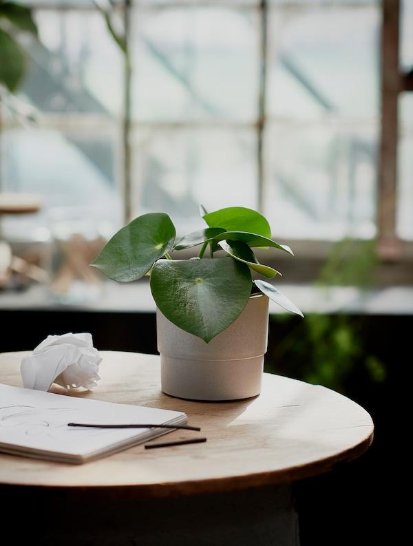 NYPON Plant pot, in/outdoor grey, 12 cm