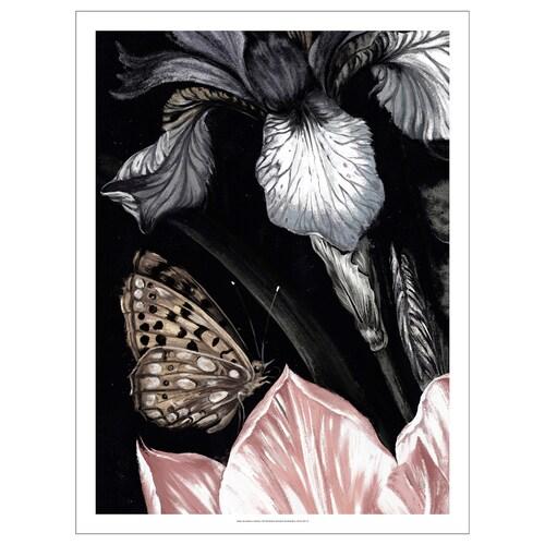 PJÄTTERYD picture Butterfly 50 cm 70 cm