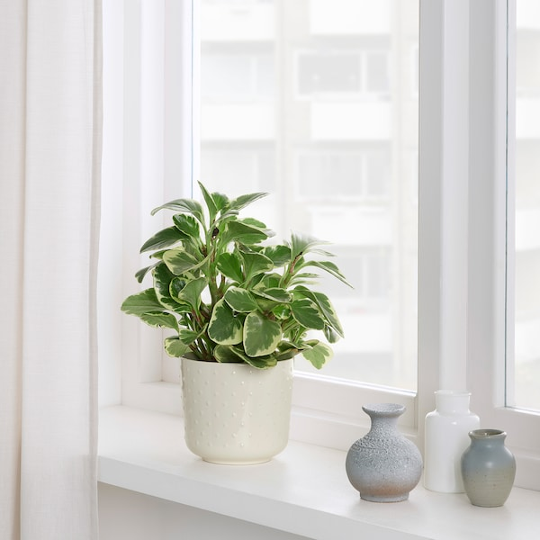 SESAMFRÖN Plant pot, in/outdoor off-white, 12 cm