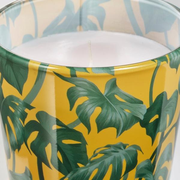 AVLÅNG ljus i glas utan doft Monstera/blad grön 7.5 cm 8 cm 25 tim.