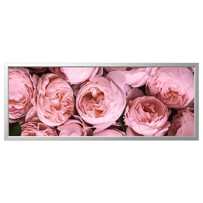 BJÖRKSTA Bild med ram, Rosa pioner/aluminiumfärg, 140x56 cm