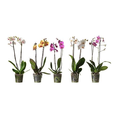Phalaenopsis krukv xt ikea - Plantas artificiales en ikea ...