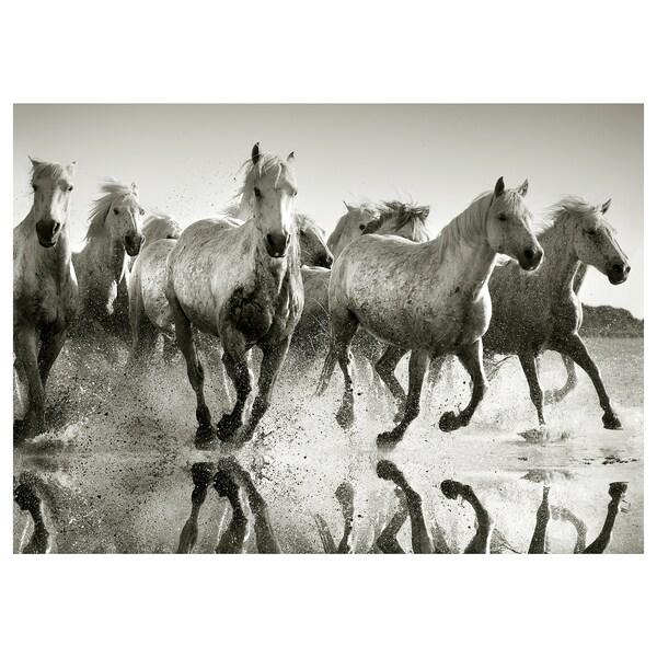 PJÄTTERYD Tavla, Vilda hästar, 70x50 cm