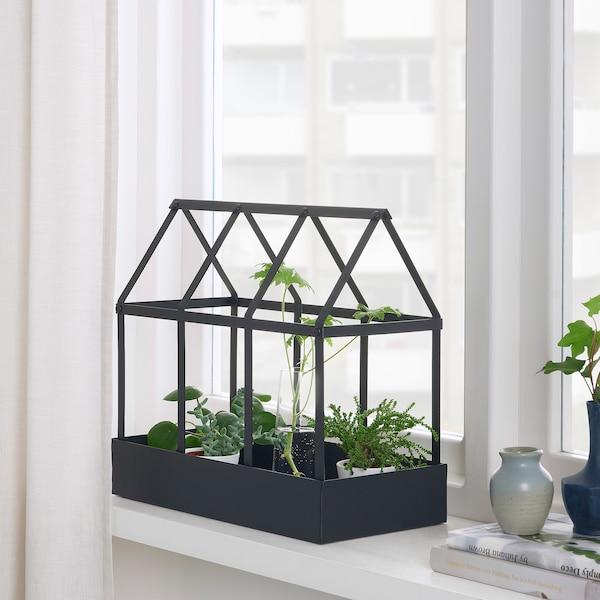 SENAPSKÅL Dekorationsväxthus, inom-/utomhus svart, 34 cm