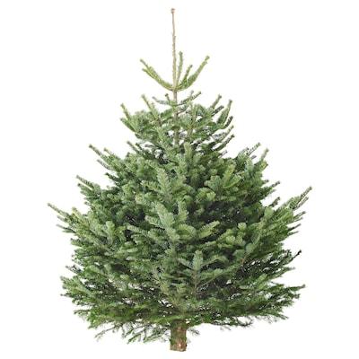 ABIES Christmas tree, 120 cm