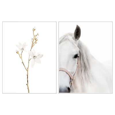 BILD Poster, white flowers and horse, 30x40 cm