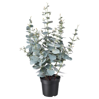 FEJKA Artificial potted plant, in/outdoor eucalyptus, 15 cm