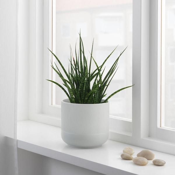 GRADVIS Plant pot, grey, 15 cm