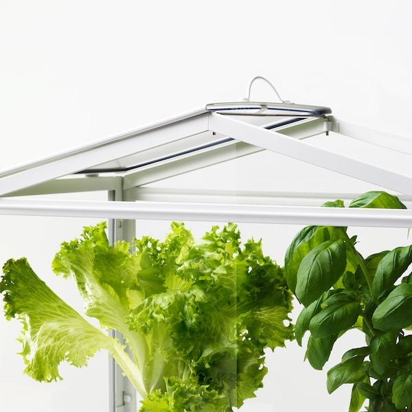 SOCKER Greenhouse, white