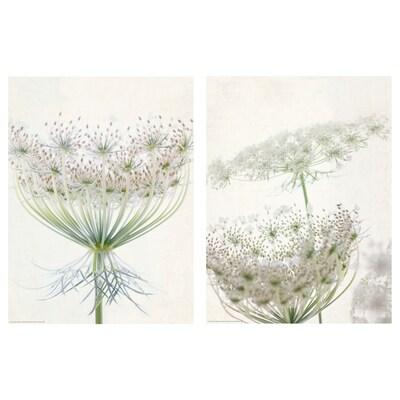 BILD Plakat, Čipkasto cvetje, 30x40 cm