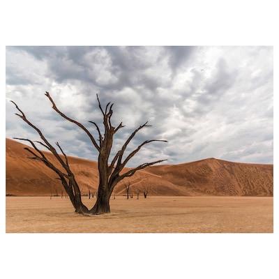 PJÄTTERYD Slika, drevo v puščavi, 100x70 cm
