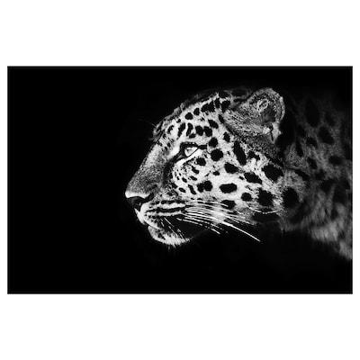 BJÖRKSTA Obraz, gepard, 118x78 cm