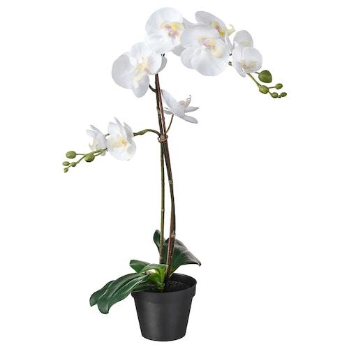 FEJKA umelá rastlina v kvetináči orchidea biela 12 cm 65 cm